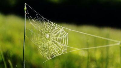 """""""La mayoría de las arañas tienen veneno pero no son peligrosas"""": Cuidados básicos a tener en cuenta"""
