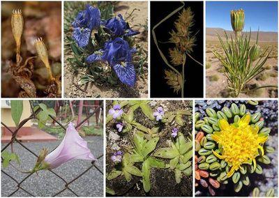 Los botánicos españoles han registrado 43 nuevas especies de plantas en 2020