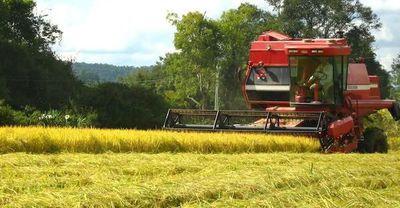 ¡Paraguay verde! Consejo agrario conversa sobre creación de código ambiental