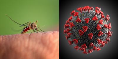 HOY / Alto Paraná: Preocupa a especialistas la combinación del Dengue y COVID-19
