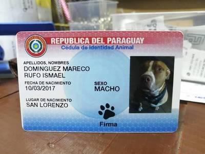 """Cédulas de mascotas"" serán comercializadas con nuevo diseño – Prensa 5"
