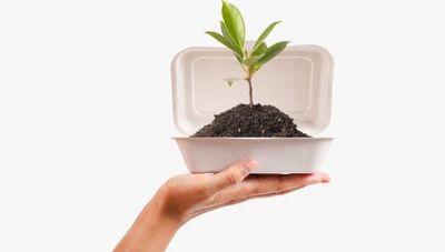 Emprendimientos sostenibles: iniciativas que buscan un mundo mejor para todos