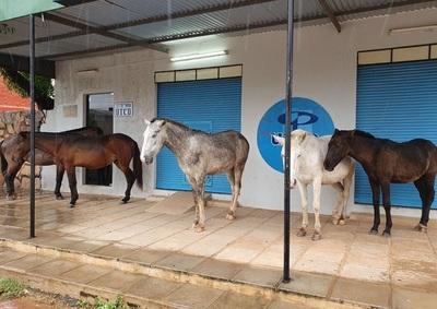 Piden al intendente contener animales sueltos en Concepción