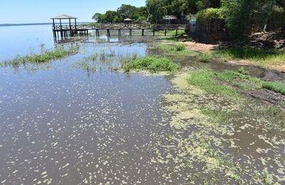 Florecimiento de  cianobacterias   en las orillas del   lago  en San Bernardino