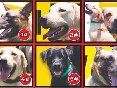 Tres mil competirán por el amor de perritos ex Senad