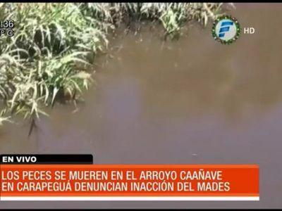 Carapeguá: Vecinos preocupados mortandad de peces en un arroyo