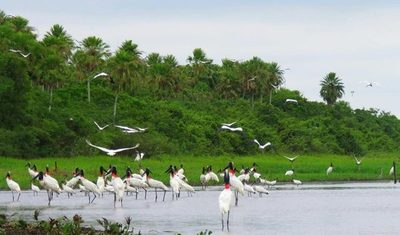 Pantanal Paraguayo: unos de los humedales de agua dulce más grande del mundo