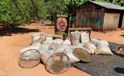 Decomisan casi 8,5 toneladas de marihuana y detienen a traficante