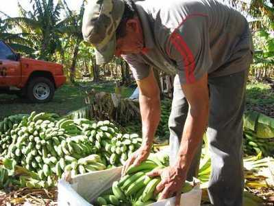 MAG invirtió G. 16.000 millones para dar asistencia técnica a 55.520 productores a nivel nacional