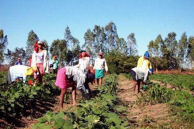 Censo Agropecuario 2021 se llevará a cabo en setiembre
