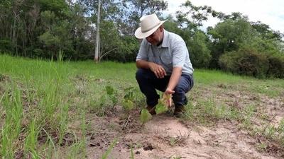 HOY / Brotan los primeros árboles nativos plantados en el Parque Guasu Metropolitano