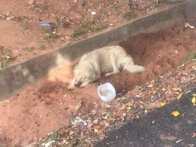 Perrito esperó más de 8 días frente al hospital a su dueña fallecida por coronavirus