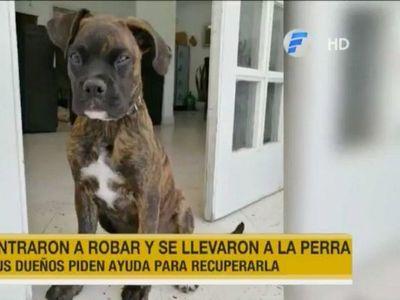 Delincuentes entraron a robar una casa y se llevaron a la mascota