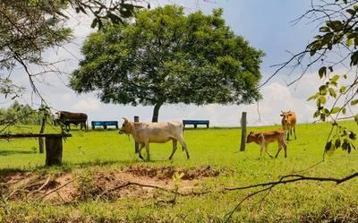 Tributación recuerda retención por la enajenación de ganado vacuno desde enero