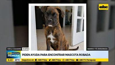Piden ayuda para encontrar mascota robada en el barrio Itá Enramada