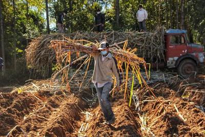 Planta de Troche cerró una zafra histórica con 400.000 toneladas molidas de caña