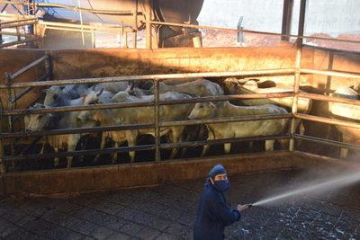 Industrial prevé que el precio del ganado se mantenga en US$ 2,80 el kilo al gancho