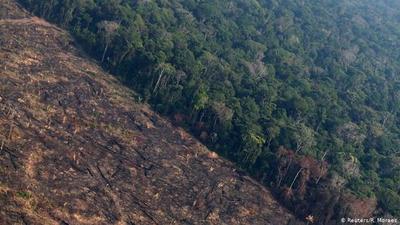 """""""La segunda peor marca anual"""": La Amazonía brasileña perdió cerca de 8.500 kilómetros cuadrados de selva en 2020"""