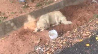 Lambaré: Perro acompañó a su dueña al hospital hasta su muerte por covid-19