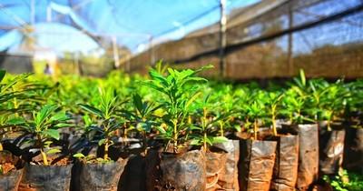 La Nación / Vivero de Itaipú produjo 1.359.304 plantines forestales, frutales nativas y exóticas en el 2020