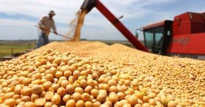 La Nación / Si precios de la soja siguen altos, ingresarán US$ 1.000 millones más