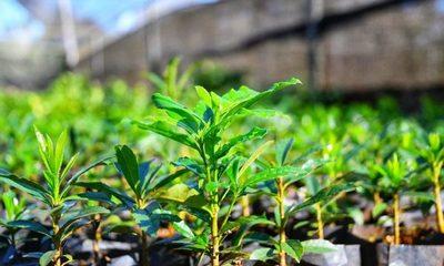 Vivero produjo más de 1.300.000 plantines forestales y frutales