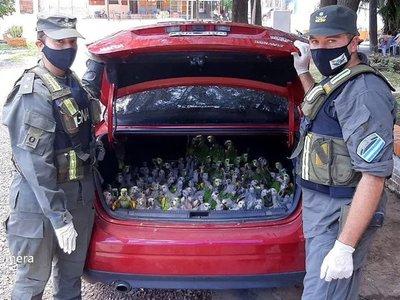 ARGENTINA: RESCATAN 216 LOROS DEL BAÚL DE UN AUTOMÓVIL