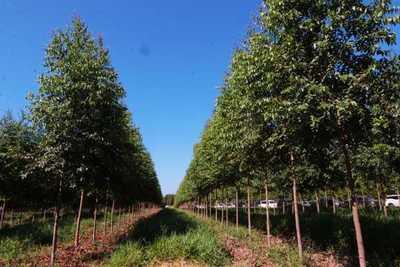 Gobierno Nacional busca promover la reactivación del sector forestal mediante créditos del BNF