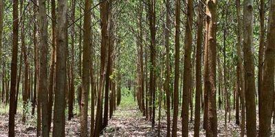 A través de créditos del BNF buscan promover la reactivación del sector forestal