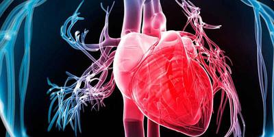 Estudio: La célula madre podrán ser el tratamiento efectivo contra el cáncer, diabetes y enfermedades cardíacas.