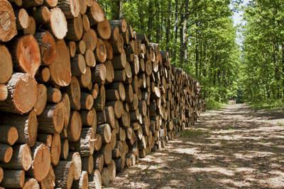 Créditos blandos para reactivación de la industria forestal