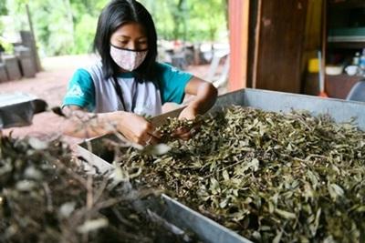 Jóvenes indígenas realizan su experiencia laboral en el Centro Ambiental de Itaipu