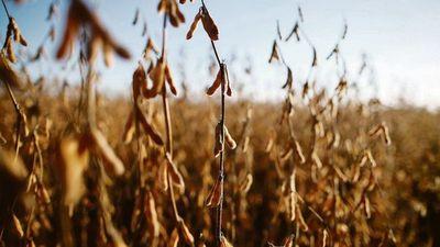 El país tendrá ingreso de 1.000 millones de dólares más, si precios de la soja siguen altos