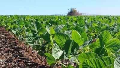 Productores celebran la buena cotización internacional de la soja
