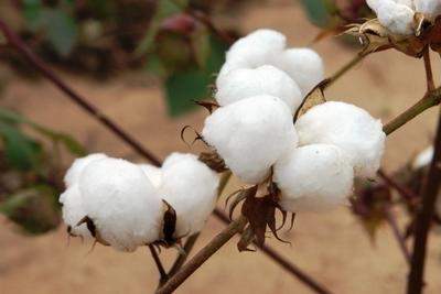 Paraguay contará con estación meteorológica en San Joaquín en apoyo a productores de algodón