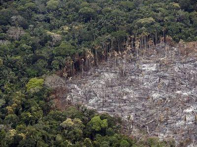 En 13 años se deforestaron un área equivalente a California