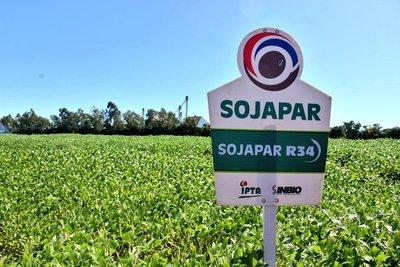 Variedades de soja paraguaya son registradas para su comercialización en el Brasil
