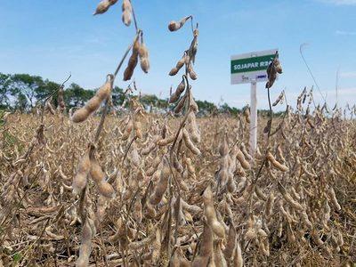 Se registran variedades de SOJAPAR en Brasil y se avanza con Uruguay