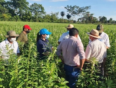 Verifican avance de cultivos de sésamo, soja y maíz de familias agricultoras en seis departamentos