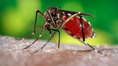 """Lucha contra el Dengue: """"Multas por no limpiar patio podrían llegar hasta 227 millones"""", advierten"""