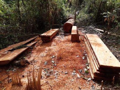 Marina Cué: Infona afirma que ocupación es ilegal y transgrede Ley de Deforestación