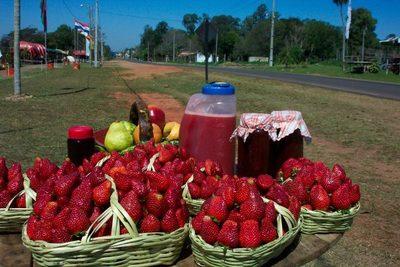 Productoras de Areguá incursionarán en cultivo hidropónico de frutillas