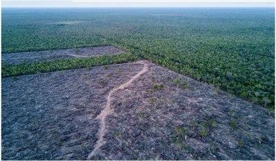 Temen que nuevo proyecto de ley favorezca al desmembramiento de más bosques