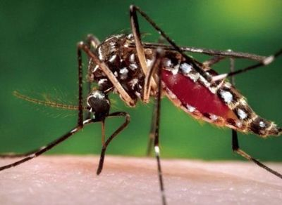 Dengue: piden especial atención  en los niños