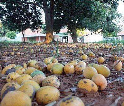 Instan a no desperdiciar y, sacar provecho al mango