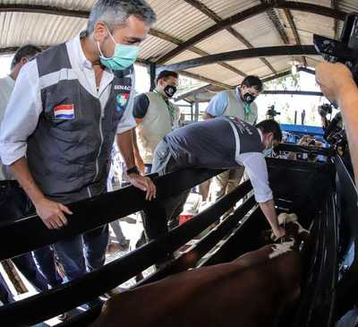 Campaña contra la fiebre aftosa y brucelosis prevé inmunizar a unos 14 millones de animales