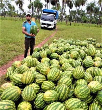 Cliente del CAH obtiene excelente producción de sandías en Horqueta