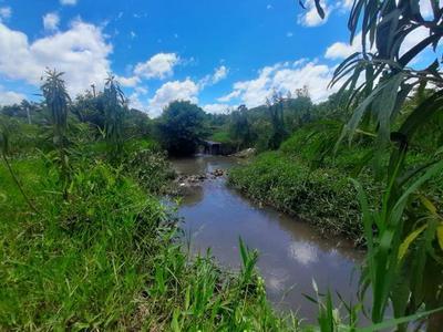 Plantean dar vida a cauce hídrico en Costa Alegre – Prensa 5