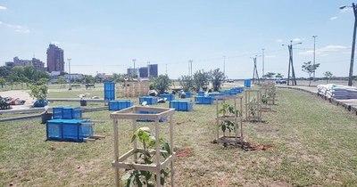 La Nación / Proyecto plantará un árbol por cada muerto de COVID-19 en Brasil