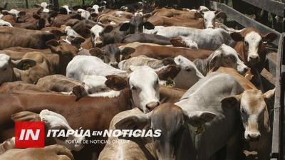ESPERAN REBROTE DE PASTURAS TRAS LLUVIA PARA ENSILAJE DE ALIMENTO PARA EL GANADO